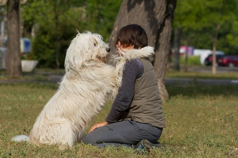 Про владельческих собак
