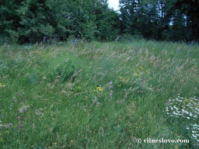 Природа радує своїм розмаїттям: Лиса гора, Київ