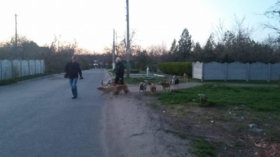 Зграї собак у Миколаєві