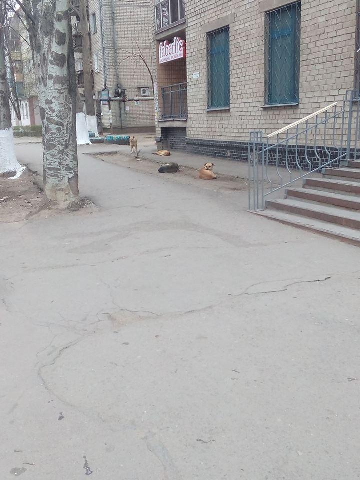Зграя собак на ринку
