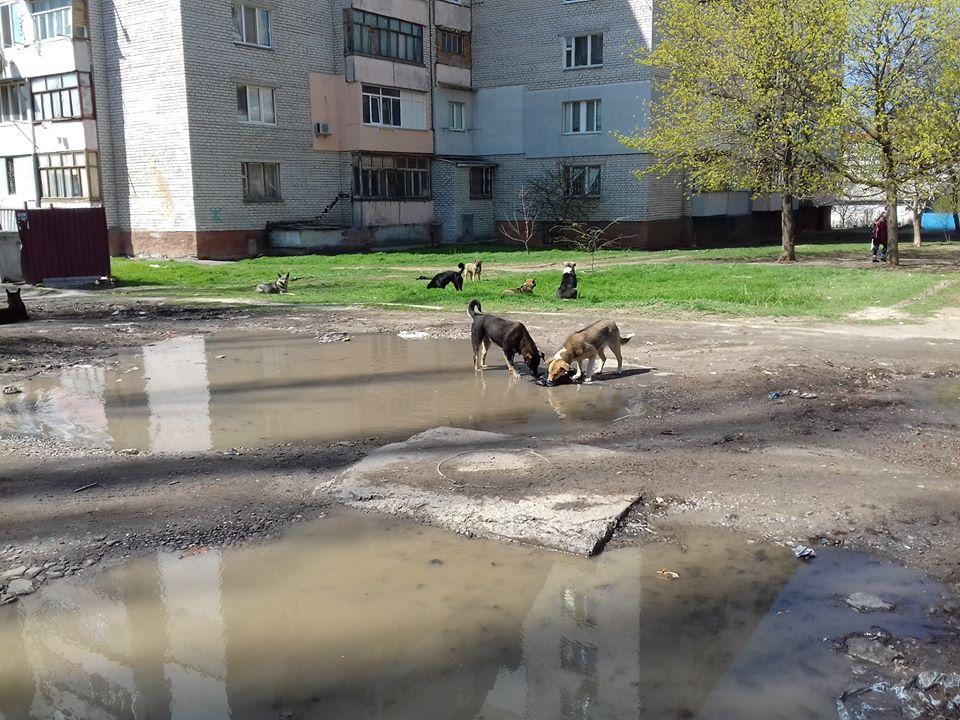 ВСП у Миколаєві: проти закону, людей і здорового глузду