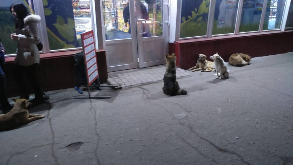 Бродячие собаки у продуктового магазина