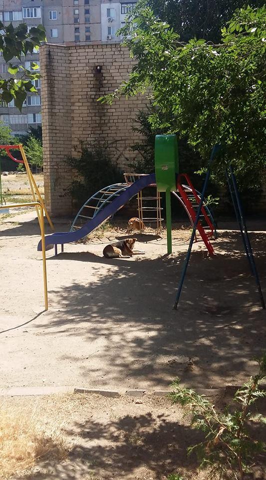 Дитячий майданчик зайнятий безпритульними тваринами