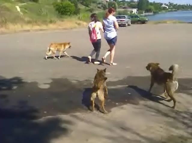 Почему в цивилизованных странах недопустимо проживание на улицах бродячих собак?