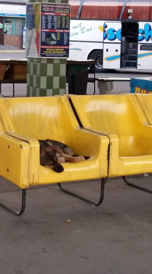 Бродяча собака на зупинці автобусу