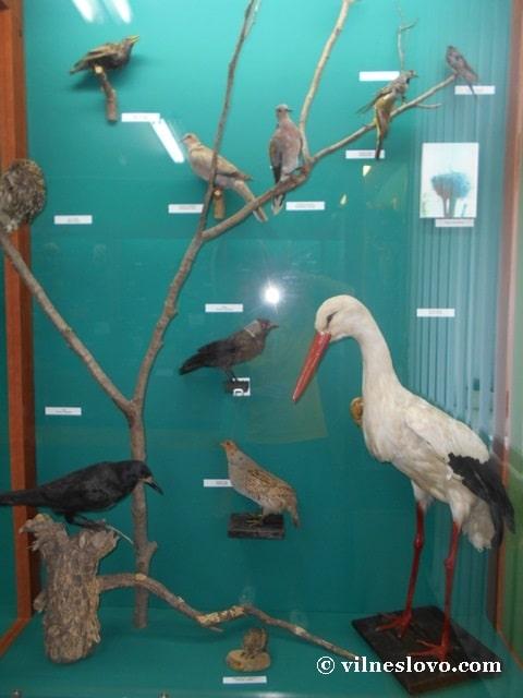 Музей Нетішина види птахів