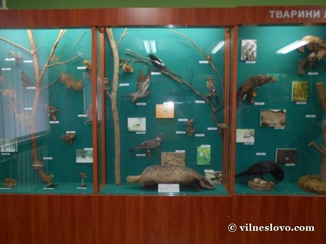 Лісові тварини музей Нетішина