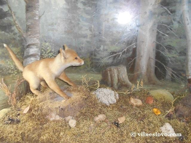 Музей Нетішина лисиця