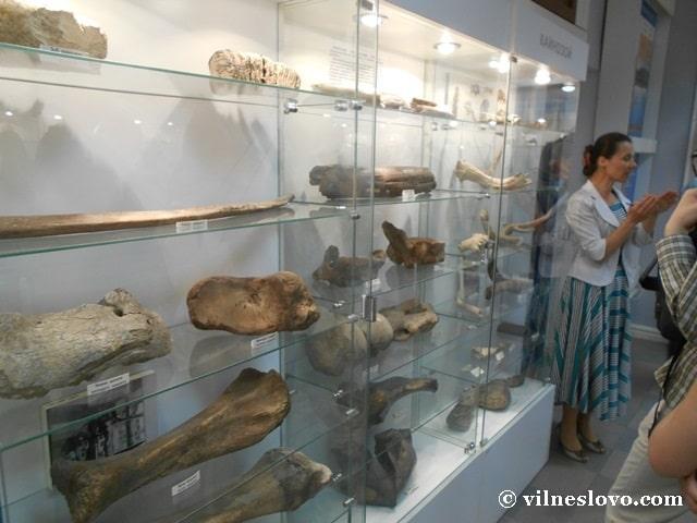 Музей Нетішина знахідки археологів