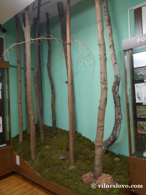 Ділянка лісу