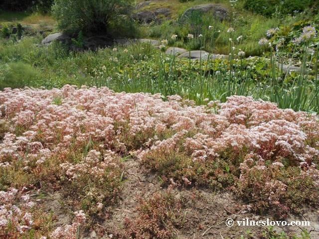 Унікальні рослини дендрологічного парку Софіївка