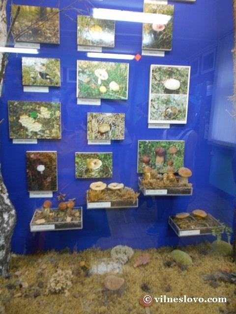 Музей Нетішина гриби