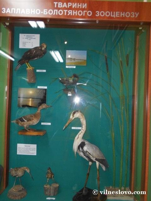 Тварини заплавно-болотного зооценозу