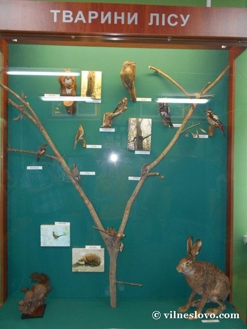 Музей Нетішина тварини лісу