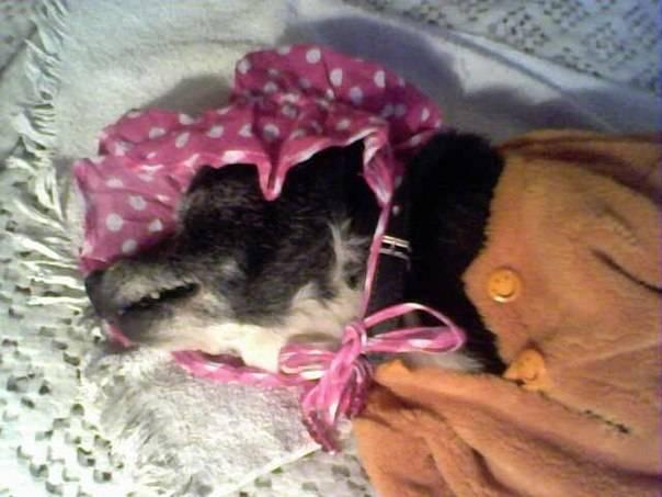 """Движение """"Окна Овертона"""" - мертвая собака в постели как предмет эстетизации"""