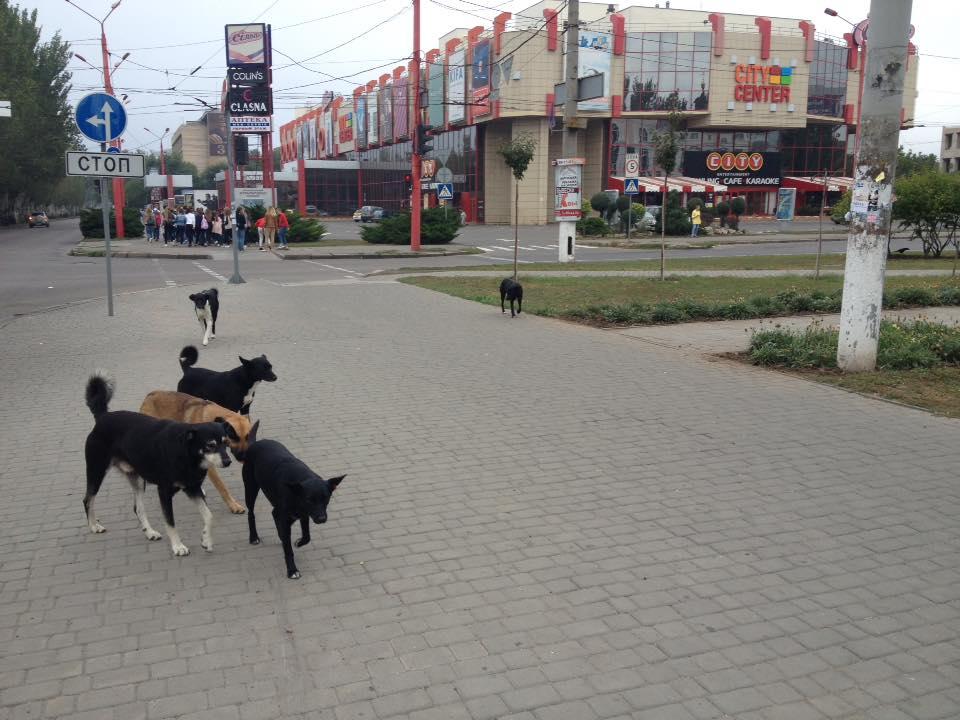 Повідомлення про виявлення бродячої собаки
