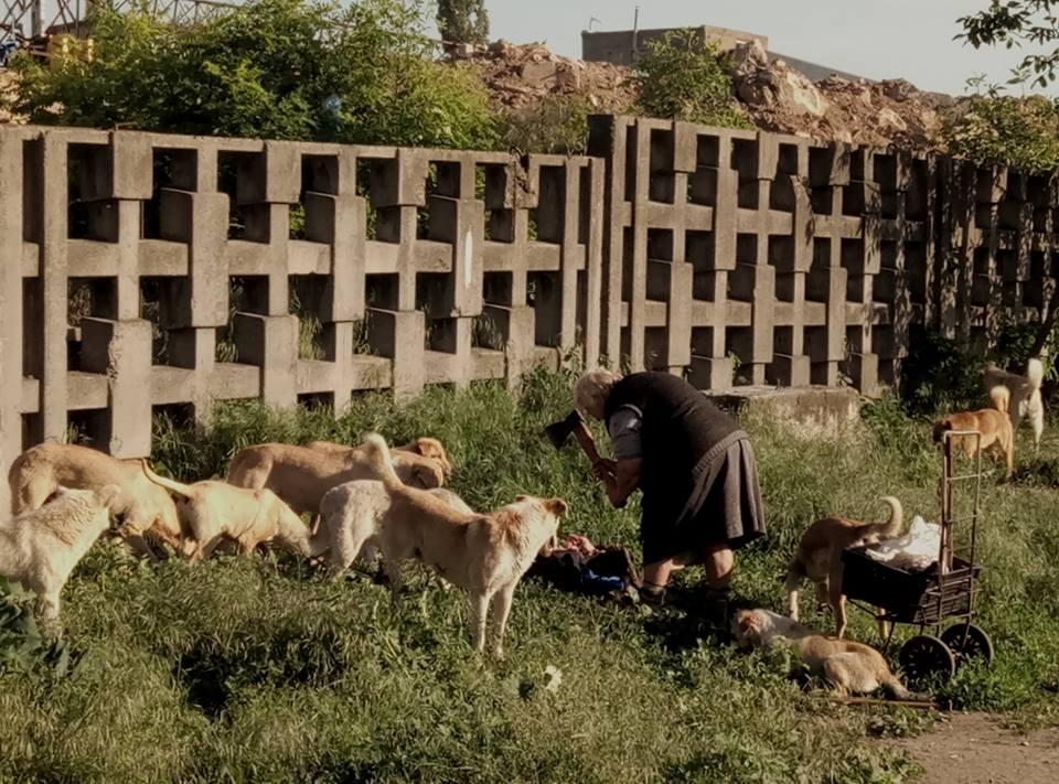 Відеоісторія про звичайну прогулянку із собаками