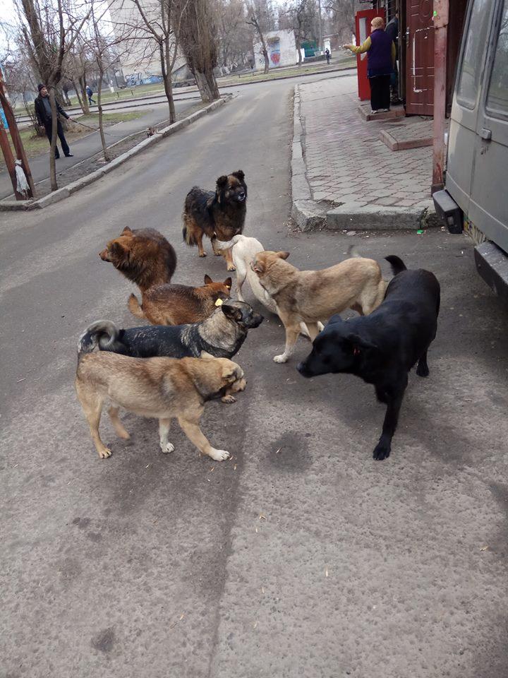 Повернення собак на вулиці – це правопорушення і жорстоке поводження (висновок експерта)