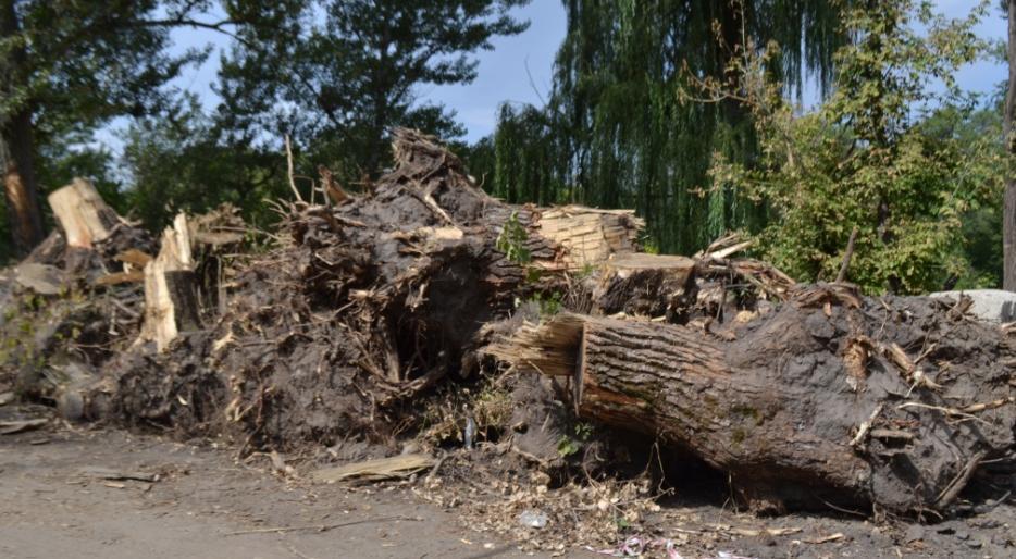 У Кривбасі знищують реліктові дерева та труять екологічних активістів