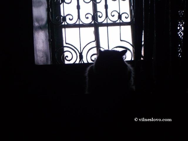 Тюремный кот