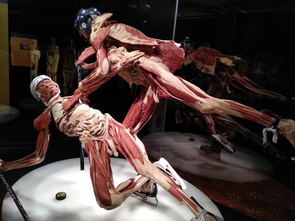 "Гунтер фон Хагенс. Выставка ""Body Worlds"" (Киев)"