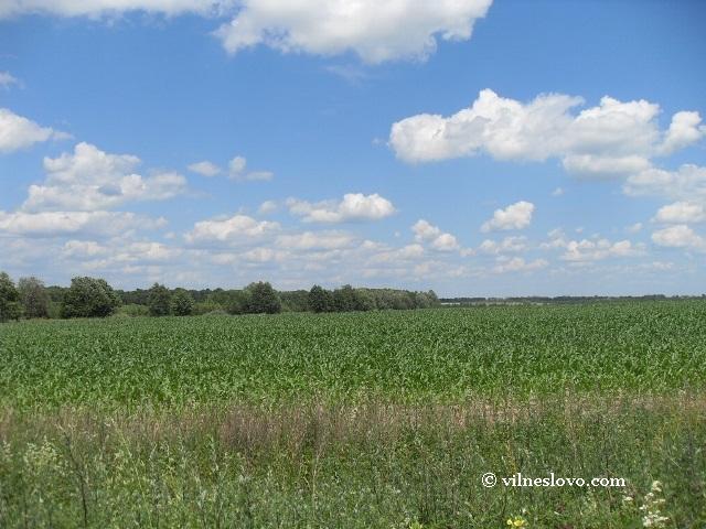 Земельна реформа: як не втратити останній актив України
