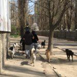 Евтаназія тварин позиція зоозахисних організацій