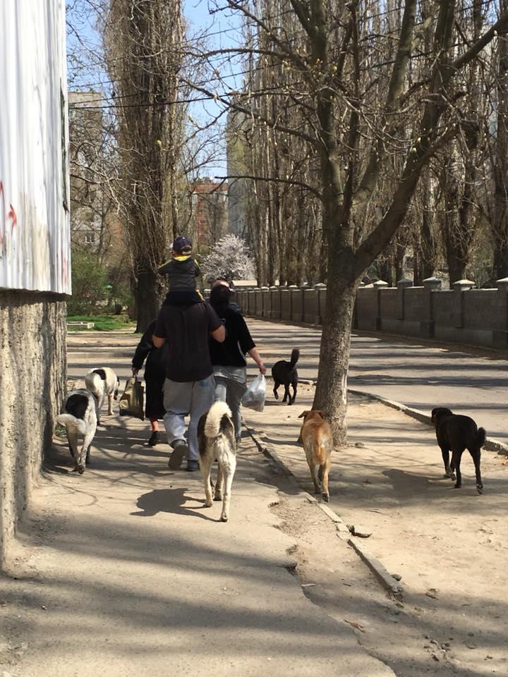 Евтаназія тварин: позиція провідних зоозахисних організацій