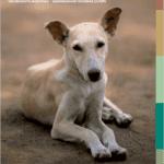 Руководство по регулированию численности собак ICAM