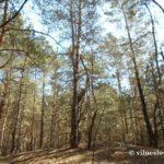 Ліс. База даних «Мисливець»