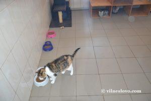 Кошка в приюте КП ЦОЖ