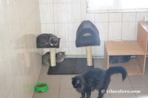Кошки приюта КП ЦОЖ