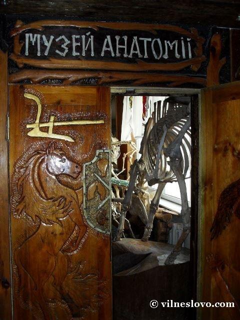 Музей анатомії тварин. Технологія пластинації