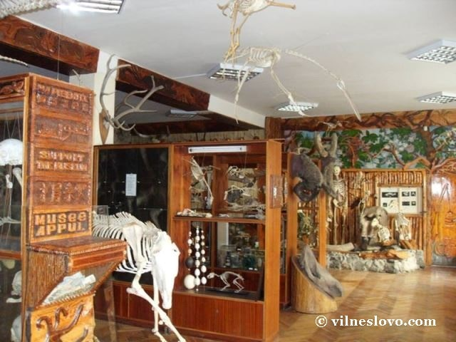 Музей анатомії тварин, експозиція