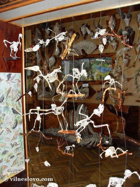 Скелети птахів і літаючих ссавців