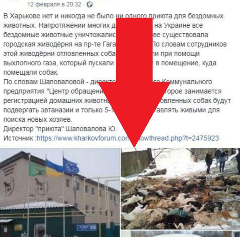 Гори мертвих собак у Краснодарі