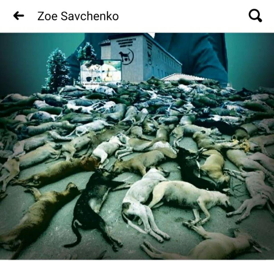 Animal-fake: харківські «гори мертвих собак»