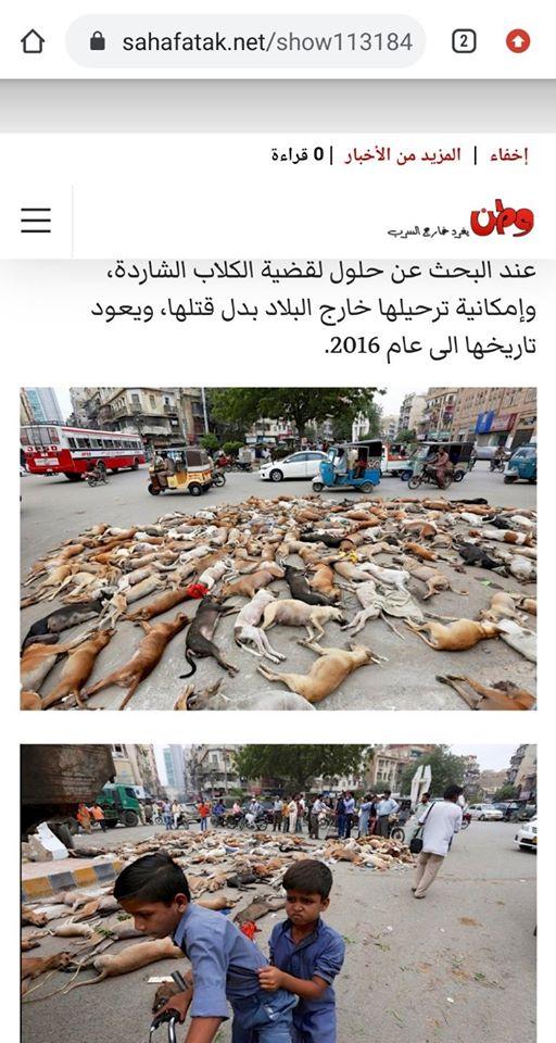 Мертві собаки в Карачі, Пакистан
