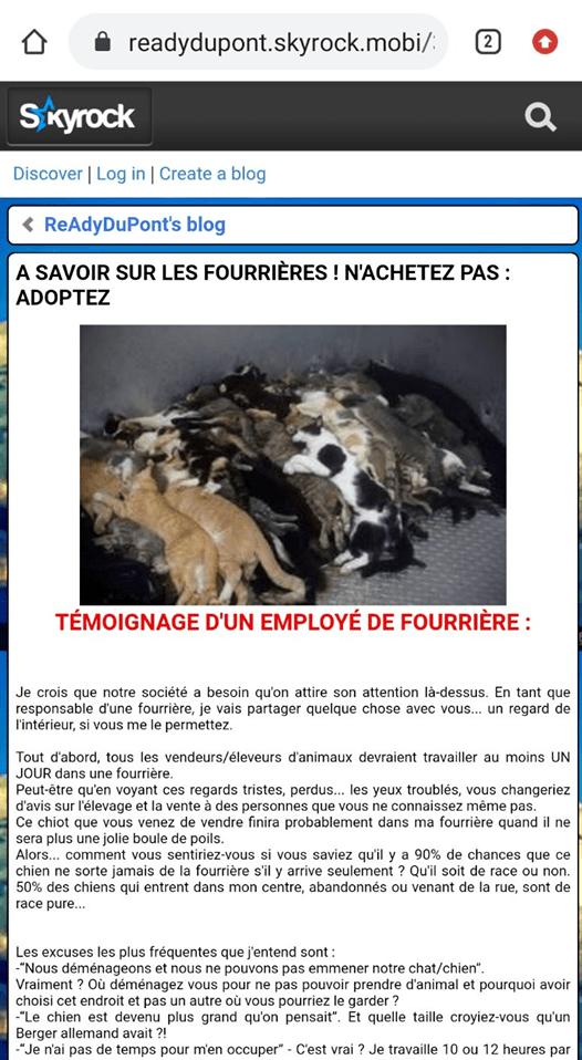 Мертві коти у притулку