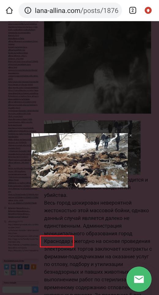 Мертві собаки у Краснодарі