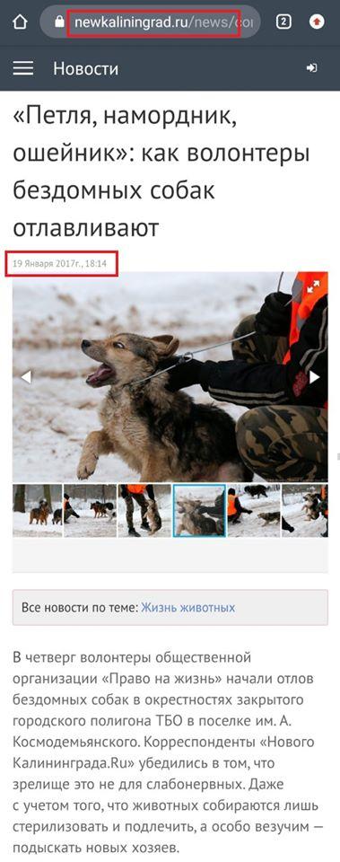 Відлов безпритульних собак