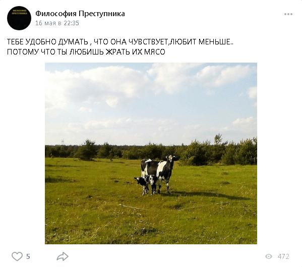 Корова може любити