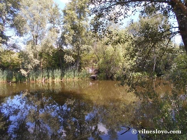Лісове озеро урочище Горбачиха