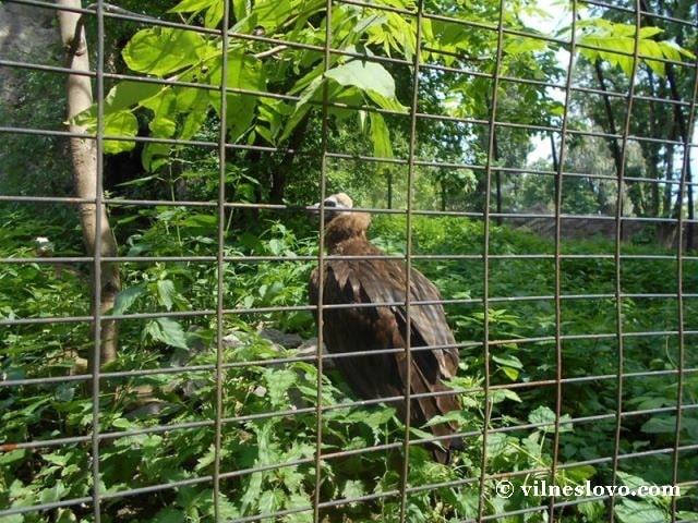 Птах гриф