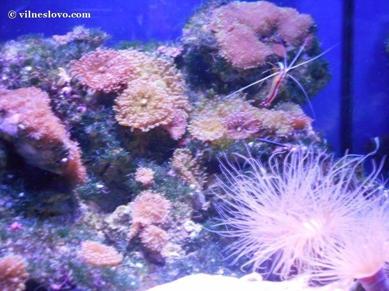 Морська казка – київський океанаріум