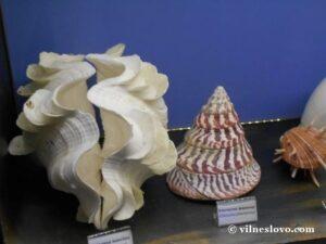 Київський океанаріум колекція раковин