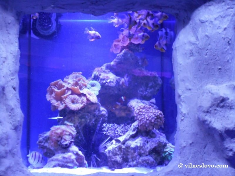 Класичні корали