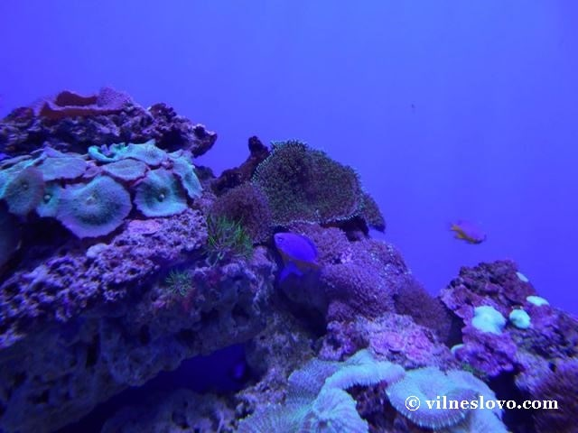 Київський океанаріум предсттавляє експозицію коралів