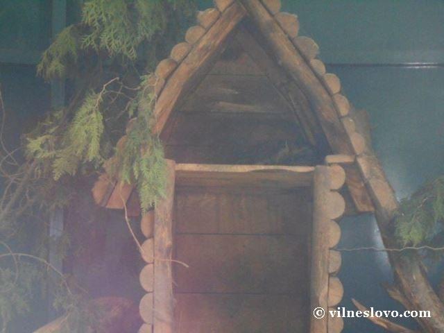 Кіт лісовий Київський зоопарк