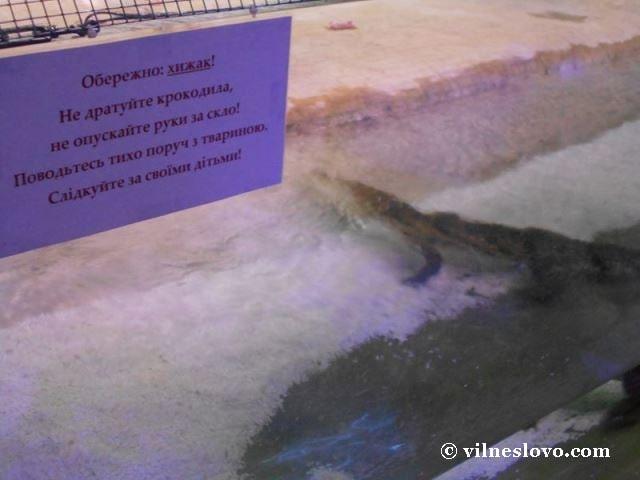 Київський океанаріум крокодил